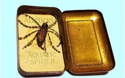 One Weird Arachnid
