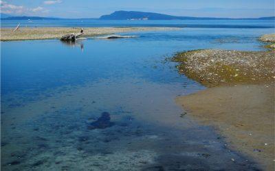 Little Q. Estuary Follow Up