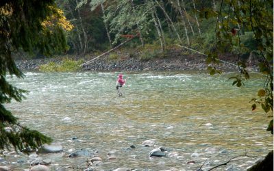 Gold River Springs  08-10 09 21